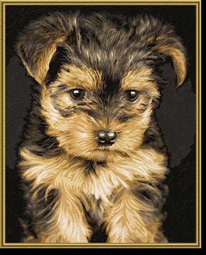 Chwalebne Zwierzęta | Szczeniak York 24 x 30 cm | Malowanie po numerach QL01